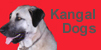 kangal button